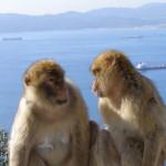 Gibraltar-08